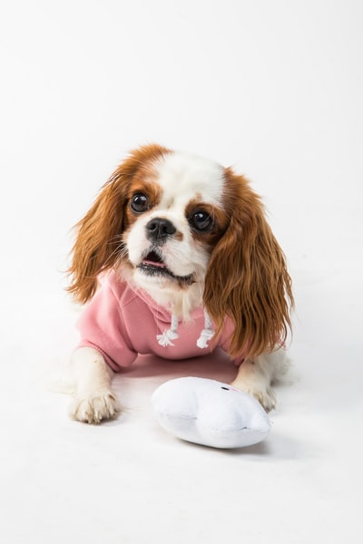 Why you need to wear dog clothing